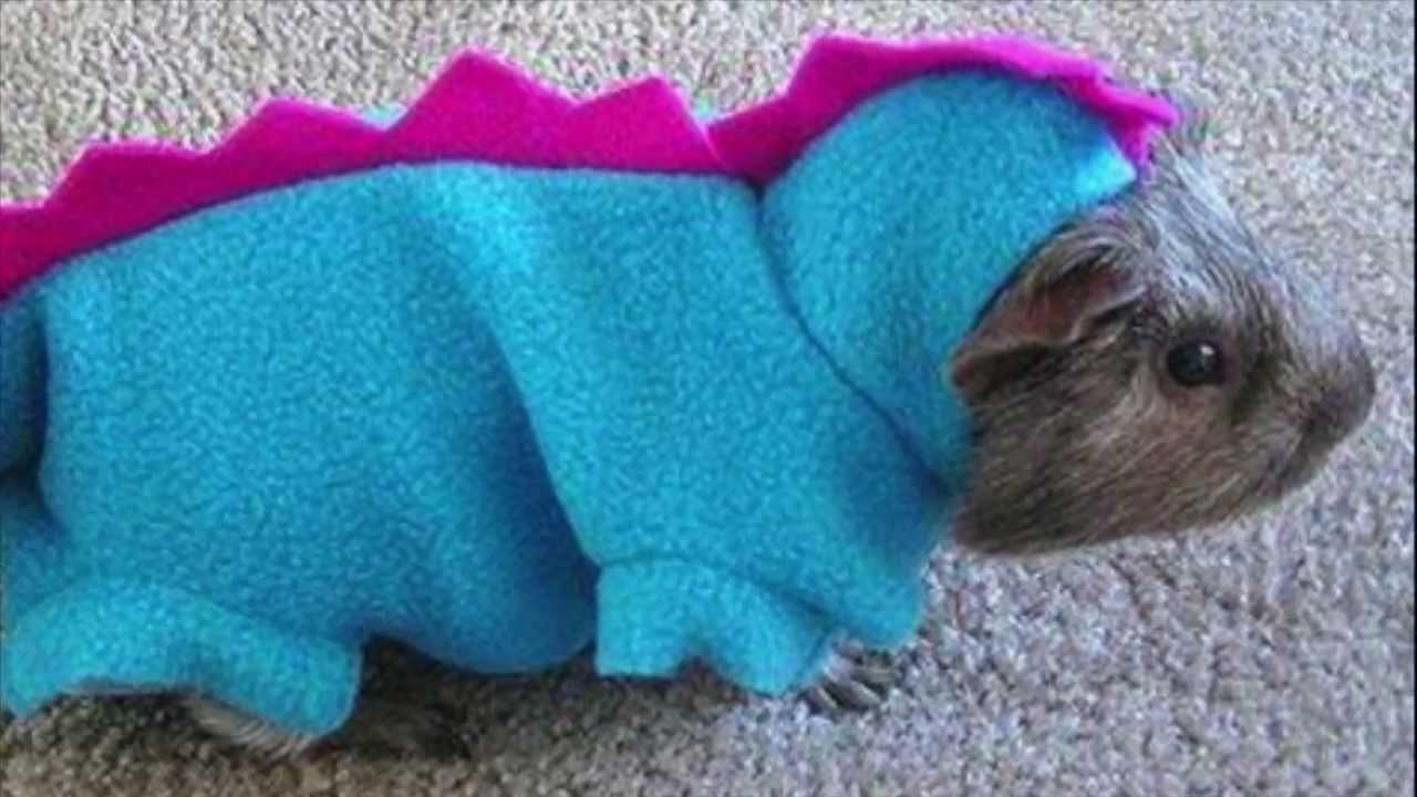 Hamster Halloween Costume Hamsters in Costume