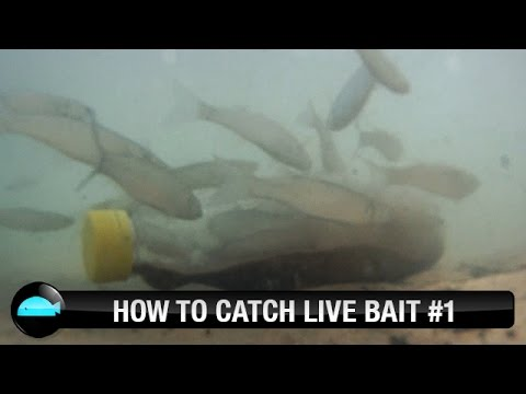 How To: Catch Live Bait