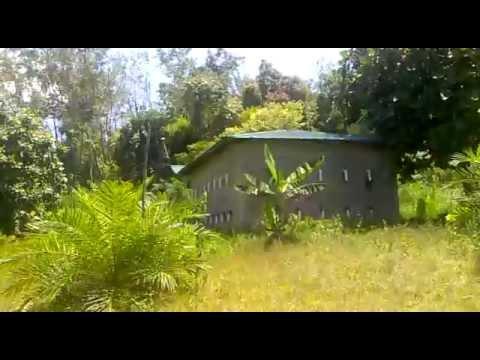 Suara Panggil Burung Walet Yang Dasyat 10 08 2013 758 video