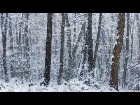 Poezja śpiewana  WOJCIECH DUTKA  Leśne Opowieści