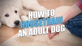 How to Housetrain An Adult Dog (Easy Housebreaking Method)