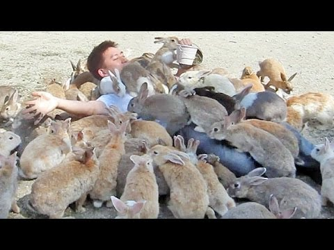 Guy Gets Smothered By Bunnies On Japan S Rabbit Island