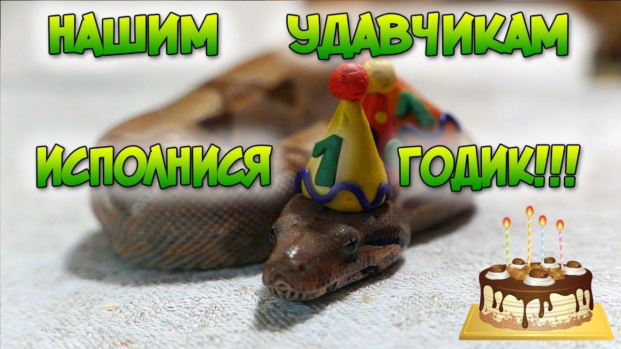 Поздравление змеи с днем рождения