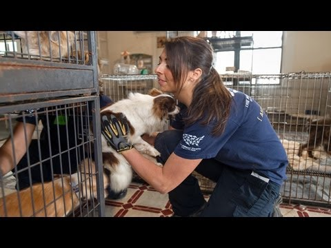 Animal Rescue Team: Meet Ashley Mauceri