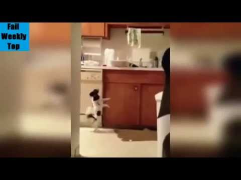 TOP Funny Animals Compilation 2014 New TOP 2014 noua compilatie haioase Animale