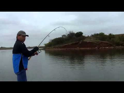 Hybrid/Stripers on Sooner Lake Oklahoma 9-15-12