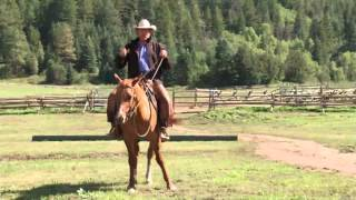 Pat Parelli: Be Assertive, Not Aggressive in Horse Training