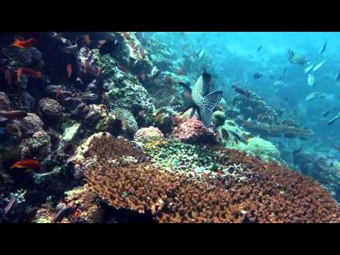 Komodo Island Diving Trip