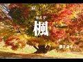楓/スピッツ/ギター弾き語り/練習中/アルペジオ