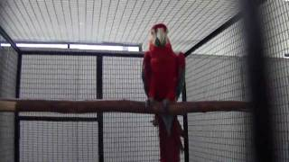 scarlet macaw in (Preethi Farms)