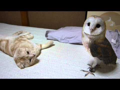 My barn owl and cat