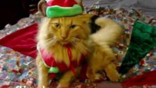 Des Animaux Chantent Jingle Bells !