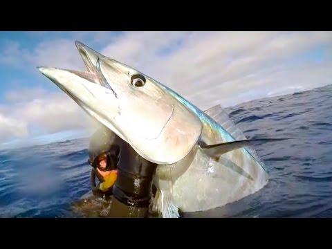 Подводная Охота. Трофейная Ваху на 40 кг.