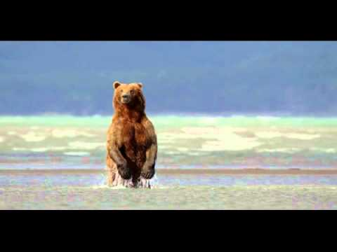 DisneyNature Bears Trailer for Movie Review at http://www.edsreview.com