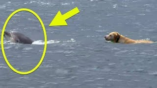 This Dog Kept Swimming Out Into The Ocean  Then His Owner Realized The Astonishing Reason Why