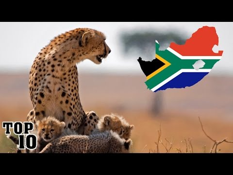 10 Things To Do In South Africa