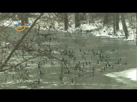 Černá smrt v Plzni