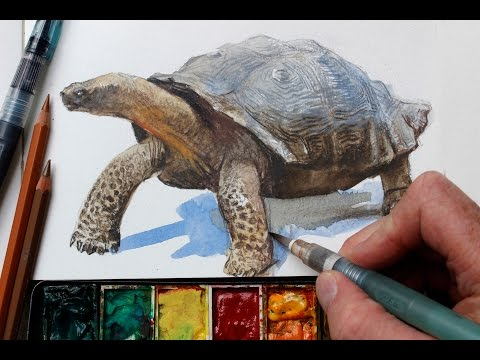 Watercolor + Colored Pencils = Fast, Realistic Textures