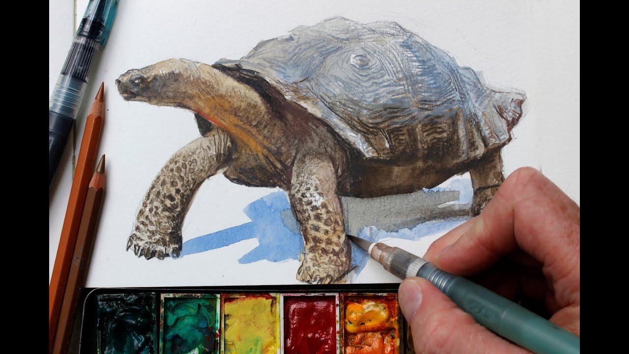 Watercolor Colored Pencils Watercolor Colored Pencils