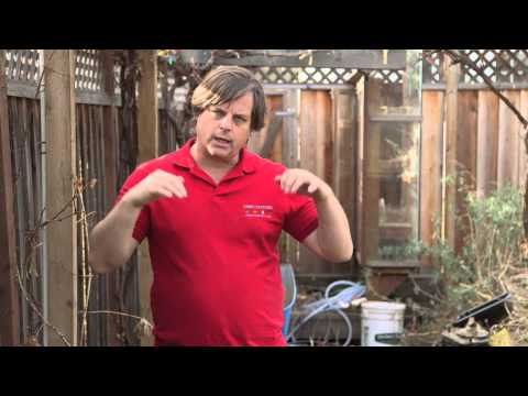 Tilling a Lawn : Spring Lawn Care