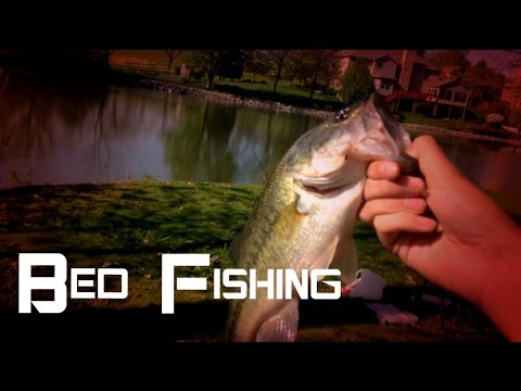 Fishing For Bedding Bass  4 24 16