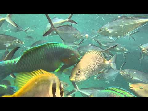 Tioman Marine Park