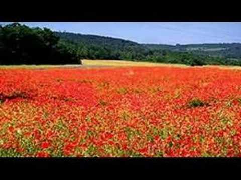 Green Fields of France by John McDermott