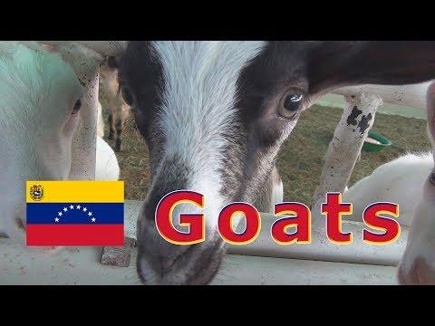 Venezuela, South America... July 5th & 6th, 2019