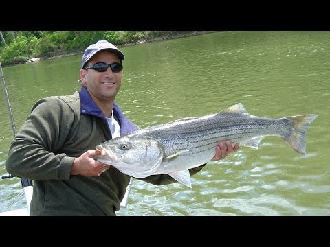 Potomac river rockfish report for Choptank river fishing report