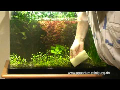 aquarium scheibenreinigung mit schwamm youtube. Black Bedroom Furniture Sets. Home Design Ideas