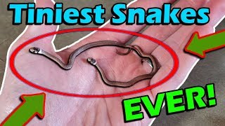 Unboxing the TINIEST Snakes Ever!
