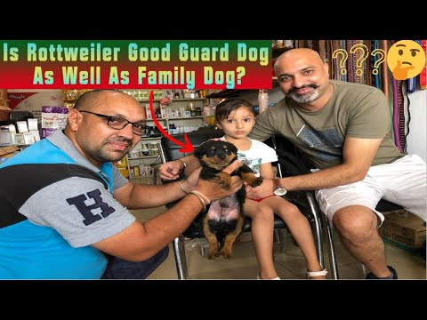Is Rottweiler Good Guard Dog As Well As Family Dog?