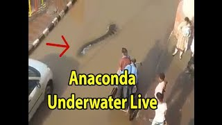Anaconda Underwater INDIAN Street LIVE Reporting