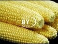 How to Cook Corn on the Cob, How long to Cook Corn, How do you Cook Corn on the Cob?