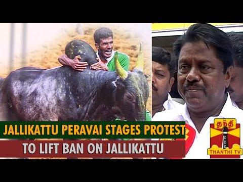 Jallikattu Peravai Members Stages Protest To Lift Ban On Jallikattu ...-thnathi Tv video