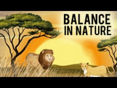 Balance In Nature Youtube