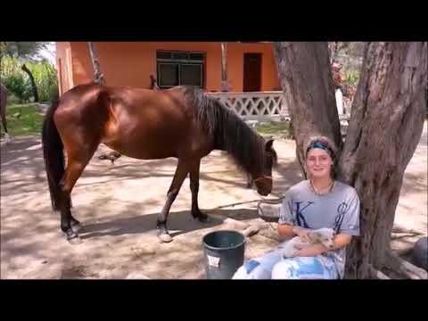 Freiwilligenarbeit, Volontariat auf einer Pferdefarm in Peru,, volunteering on a horsefarm in Peru