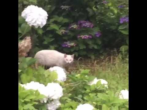 野良猫チャッコメの探検