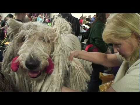 0 How pooches get primped for the Westminster Dog Show