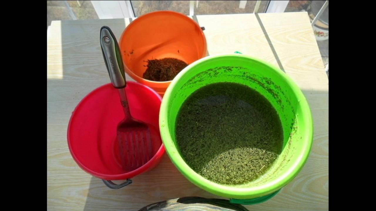 Заготовка семян в домашних условиях 551