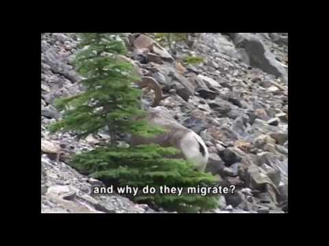 Migration And Hibernation (Accessible Preview)