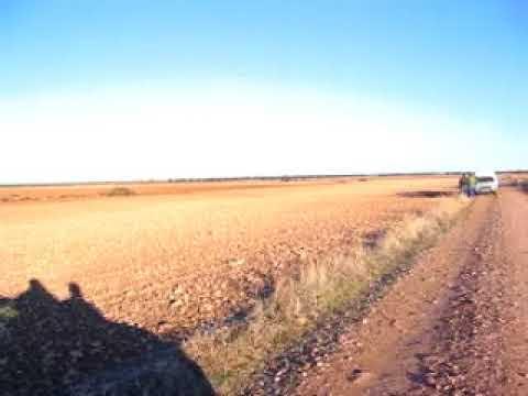 caza de la liebre con galgos