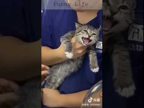 FUNNY Cat - TRY NOT TO LAUGH - Awesome Funny Cats' life video