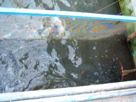 Pin criadero de peces on pinterest for Criadero de peces en casa
