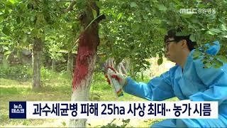 과수세균병 피해 25ha 사상 최대..농가 시름