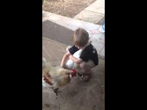 ニワトリと熱い抱擁を交わしている少年