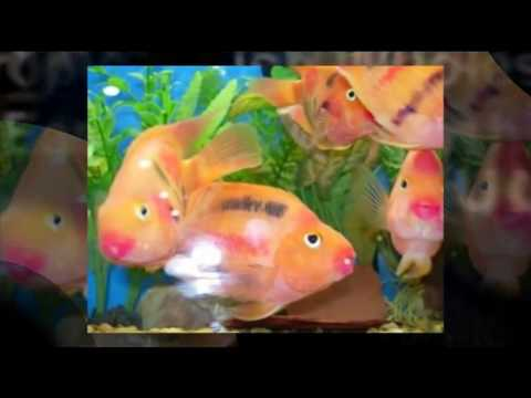 Wholesale fish prices at thedoglogs for Wholesale tropical fish