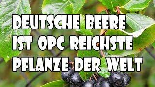 Kennst du schon die OPC reichste Pflanze der Welt für dein Wohnzimmer ?