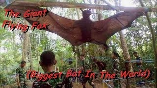The BIGGEST Bat In The WORLD! **MUST SEE!!**
