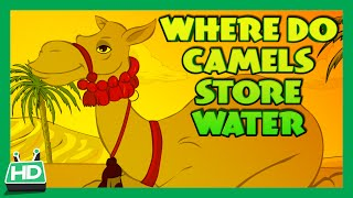 WHERE DO CAMELS STORE WATER ?